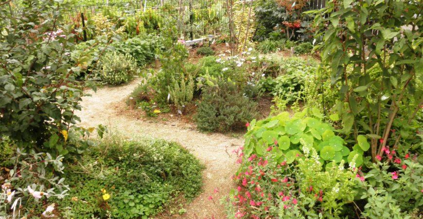 ガーデン造成 果樹をめぐる庭|秩父郡横瀬町 O様邸の造成、植栽工事