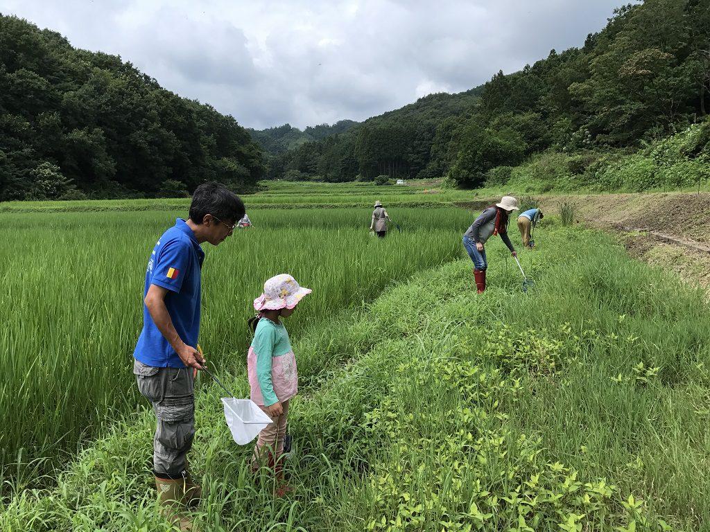 田んぼでの生き物調査