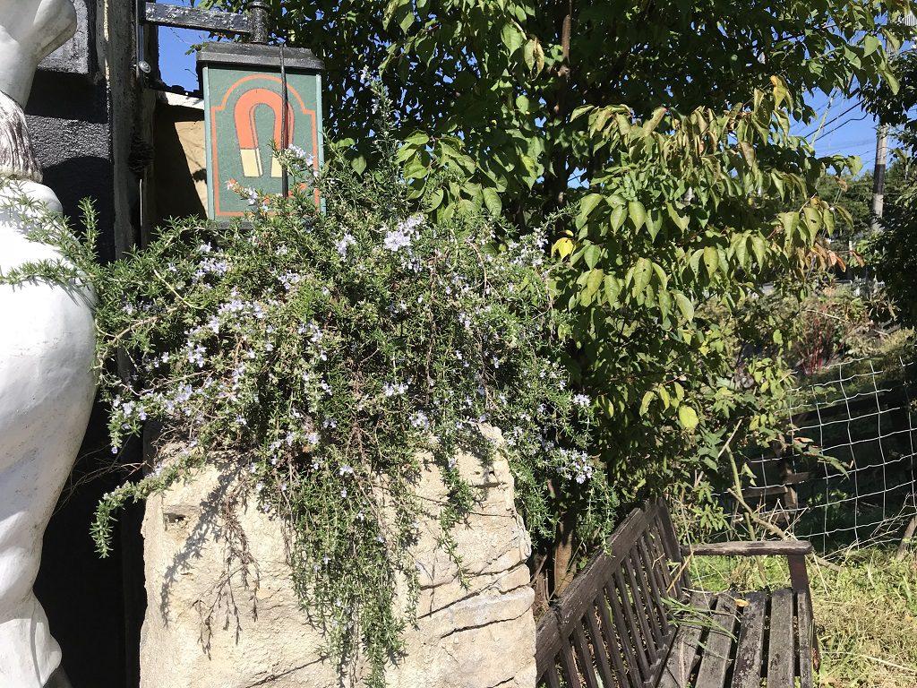 植物と絡めた古民家