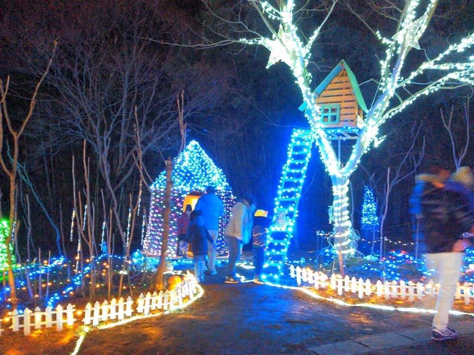山元のイルミネーションイベント「コダナリエ」|今季はツリーハウスとCozyで参加
