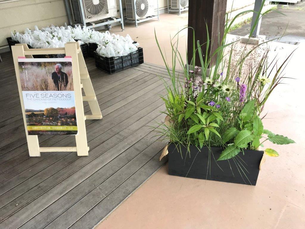 宿根草の花苗3ポットのプレゼント