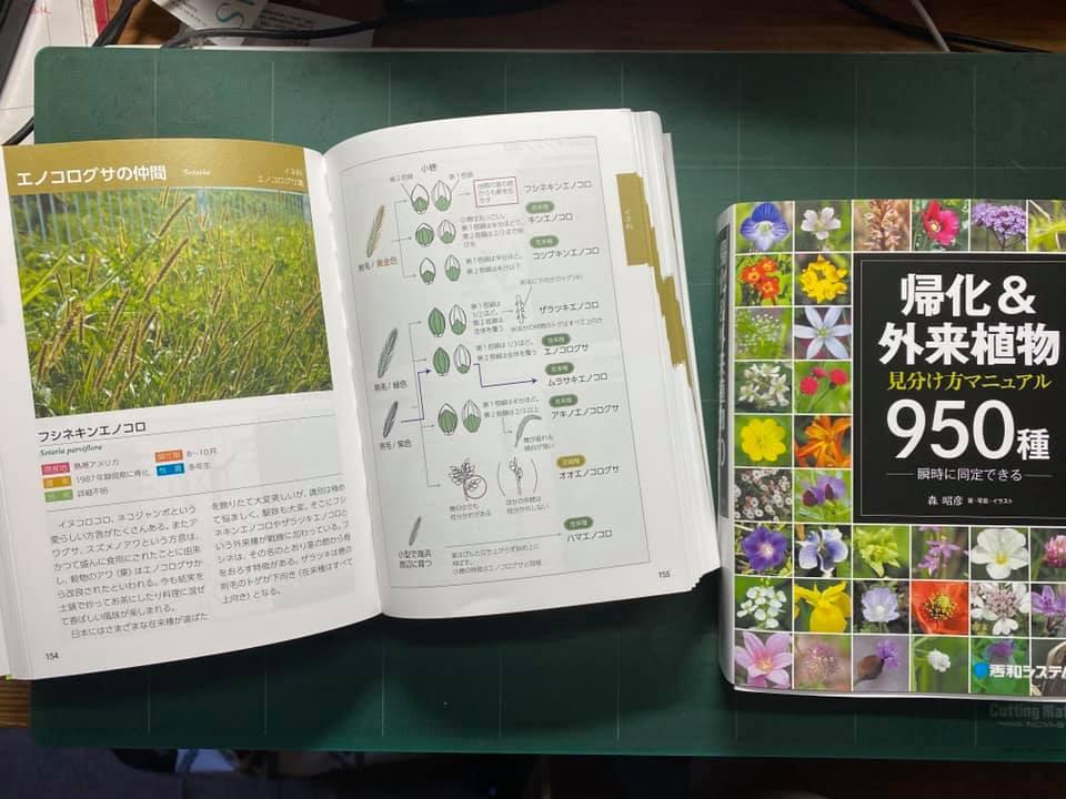 帰化&外来植物 見分け方マニュアル 950種類